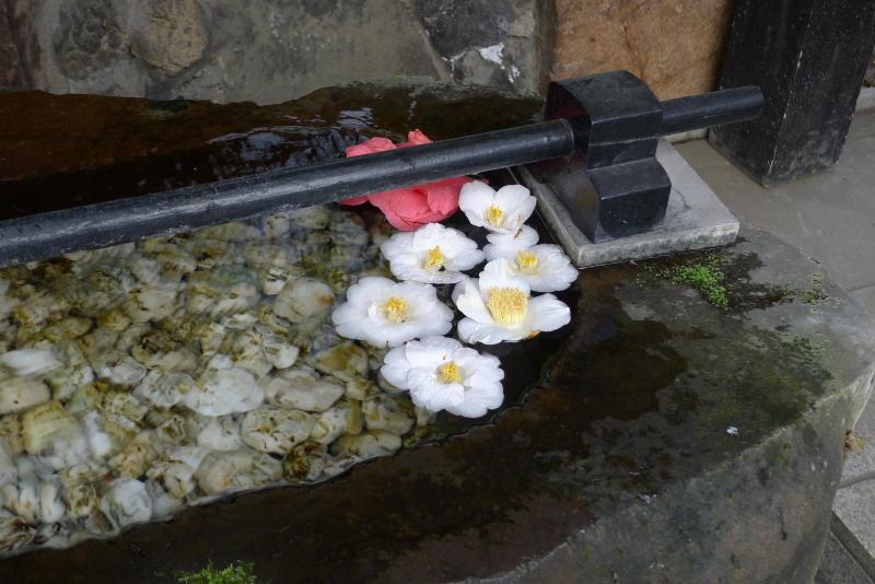 三崎稲荷神社の手水の水盤に浮かべられた椿の花