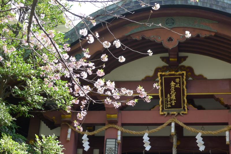 金刀比羅宮東京分社の社殿