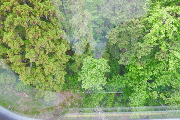 宝登山ロープウェイから下を見た景色