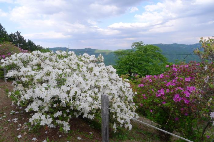 宝登山神社つつじ園