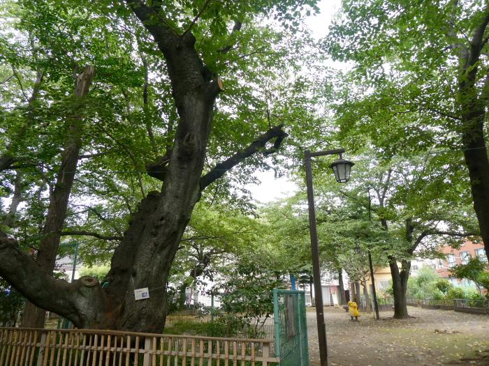 豊島区駒込妙技神社に隣接する公園