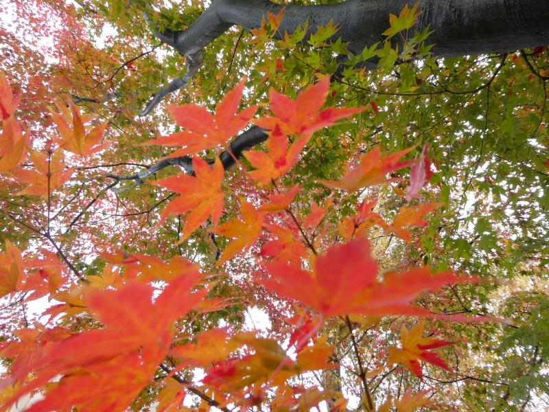 石川県金沢市の尾崎神社の紅葉