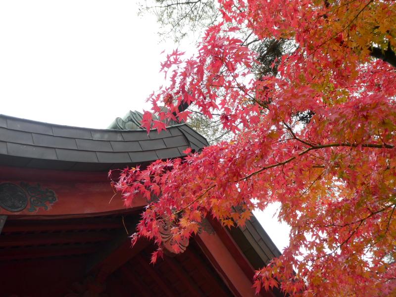 石川県金沢市の尾崎神社の境内の紅葉